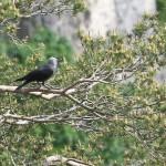 Vogel 3 Kopie